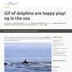 Gif of dolphins are happy playing in the sea