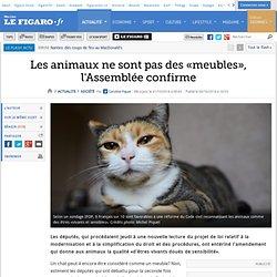 Les animaux ne sont pas des «meubles», l'Assemblée confirme