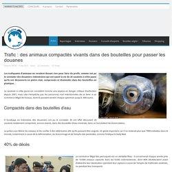 Trafic : des animaux compactés vivants dans des bouteilles pour passer les douanes