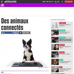 Des animaux connectés