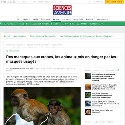 AFP 21/01/21 Des macaques aux crabes, les animaux mis en danger par les masques usagés