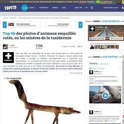 Top 46 des photos d'animaux empaillés ratés ou les misères de la taxidermie
