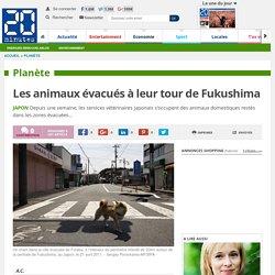 Les animaux évacués à leur tour de Fukushima