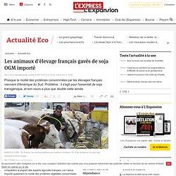 Les animaux d'élevage français gavés de soja OGM importé