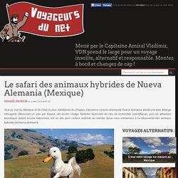 Le safari des animaux hybrides de Nueva Alemania (Mexique)