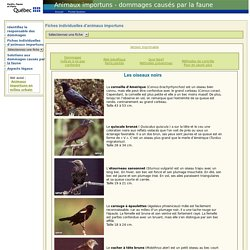 Animaux importuns - dommages causés par la faune