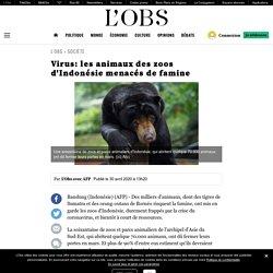 AFP 30/04/20 Virus: les animaux des zoos d'Indonésie menacés de famine