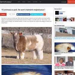 15 animaux à poil. Ils sont vraiment majestueux !