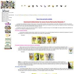 Oiseaux > Races et Espèces > Becs crochus > Perruche ondulée > Sexe d'une perruche ondulée