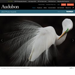 Announcing the 2015 Audubon Photography Awards