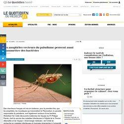 Les anophèles vecteurs du paludisme peuvent aussi transmettre desbactéries