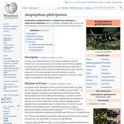 WIKIPEDIA - Anoplophora glabripennis.