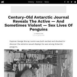 Antarctic Explorer's Century-Old Journal Describes 'Perverted' Penguins
