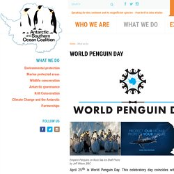 World Penguin Day - Antarctic and Southern Ocean Coalition