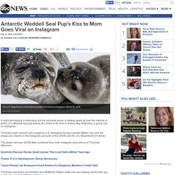 Antarctic Weddell Seal Pup's Kiss Goes Viral on Instagram