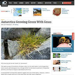 Antarctica Growing Green With Grass