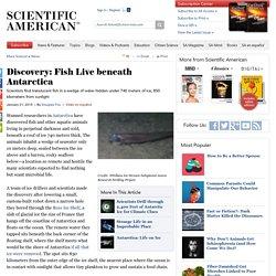 Discovery: Fish Live beneath Antarctica