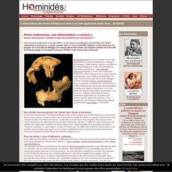 Homo antecessor machait beaucoup des aliments durs