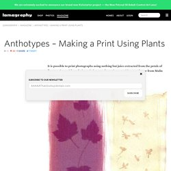 Anthotypes – Making a Print Using Plants