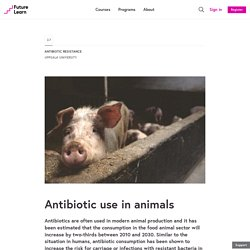 Antibiotic use in animals - Antibiotic Resistance - Uppsala University