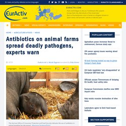 EURACTIV 31/07/15 Antibiotics on animal farms spread deadly pathogens, experts warn