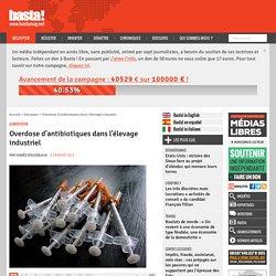 Overdose d'antibiotiques dans l'élevage industriel