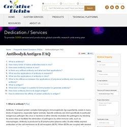 antibody molecular weight