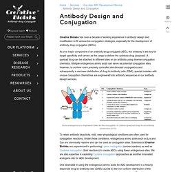 ADC conjugate