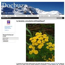 La tanaisie, une plante antiherpétique?