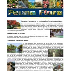 Antilles: Faune et Flore