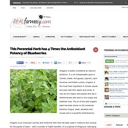 Oregano Has 4 Times The Antioxidant Potency Of Blueberries