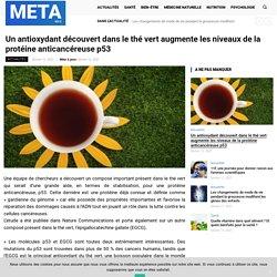 Un antioxydant découvert dans le thé vert augmente les niveaux de la protéine anticancéreuse p53