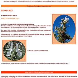 Le ROMARIN, Rosmarinus officinalis, plante médicinale, foie et voies biliaires, huile essentielle de romarin tonique et antiseptique, condiment dans l'alimentation