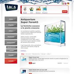 Antquarium super Forest Ant: ecosistema con piante e formiche per bambini