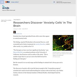 Anxiety Neurons Found In Brains