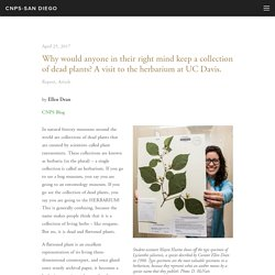 Why would anyone in their right mind keep a collection of dead plants? A visit to the herbarium at UC Davis. — CNPS-San Diego