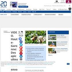 VIDEO. Haute-Garonne: Des apiculteurs vous envoient des graines pour sauver les abeilles (et c'est gratuit)