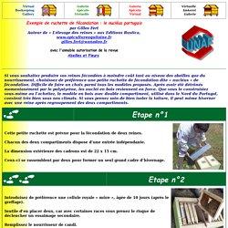 Exemple de ruchette de fécondation : le nucléus portugais