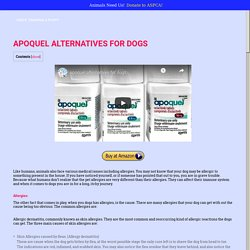 Apoquel alternatives for your itchy dog