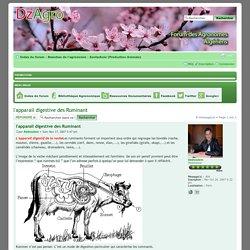 l'apparail digestive des Ruminant