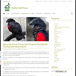 Apparently, Dracula Parrots Are A Thing And They Might Be The Most Gothic Birds On Earth