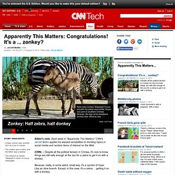 Apparently This Matters: New baby zonkey
