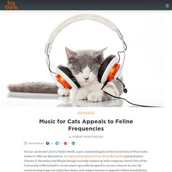 Music for Cats Appeals to Feline Frequencies