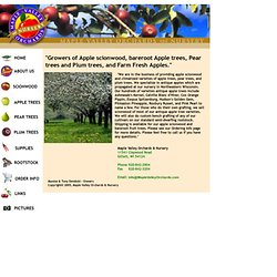 Apple Trees - Maple Valley Orchards