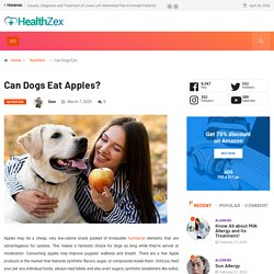 Can Dogs Eat Apples - Is it safe to consume Apple Products?