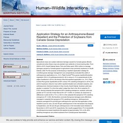 Human–Wildlife Interactions - 2019 - Application Strategy for an Anthraquinone-Based Repellent and the Protection of Soybeans from Canada Goose Depredation