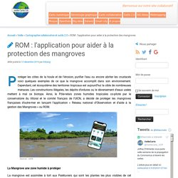 ROM : l'application pour aider à la protection des mangroves