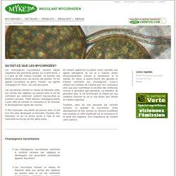 Tout savoir sur la Mycorhizes, bénéfices, application et recherche et développement