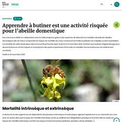INRAE 26/11/20 Apprendre à butiner est une activité risquée pour l'abeille domestique