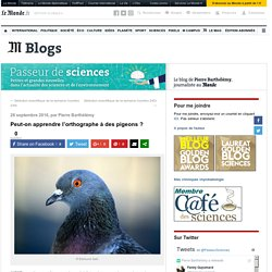 Peut-on apprendre l'orthographe à des pigeons